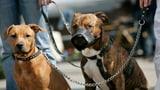 Mehr Hundebisse in Graubünden (Artikel enthält Audio)