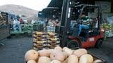 EU muss Lebensmittel aus besetzten Gebieten kennzeichnen (Artikel enthält Audio)