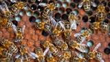 Wo schlafen Bienen?