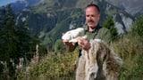 Video «Bergwelt Schweiz: Calanda – Begegnungen mit dem Wolf (4/5)» abspielen