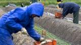 Alle Arbeitnehmer sollen würdig leben können (Artikel enthält Video)