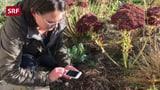 Pflanzen bestimmen einfach gemacht (Artikel enthält Video)