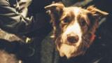 Wau wau wau: so viele herzige Hunde auf dem Europaplatz! (Artikel enthält Bildergalerie)