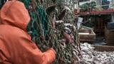 Schmiergeld für höhere Fangquoten vor Westafrika (Artikel enthält Audio)