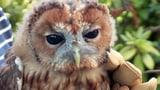 Video «Tiergeschichten (10/10): Engagement für Tiere» abspielen