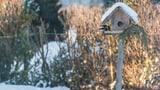 Vögel füttern im Winter (Artikel enthält Audio)