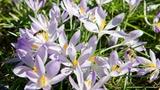 Die zehn schönsten Frühlingssongs (Artikel enthält Audio)