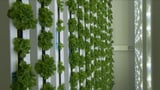 Basel, Gossau, Dubai: Start-up stellt Landwirtschaft auf den Kopf (Artikel enthält Video)