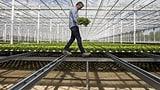 Wie das Grünzeug grüner werden soll (Artikel enthält Video)