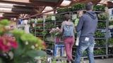 Viele Verkäufer haben von Botanik wenig Ahnung (Artikel enthält Video)