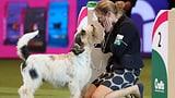 Die grösste Hundemesse der Welt (Artikel enthält Audio)