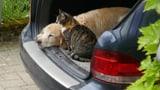 Tierisch gute Fotos (Artikel enthält Bildergalerie)