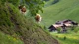 Pro Jahr machen 1000 Bauernhöfe dicht (Artikel enthält Audio)