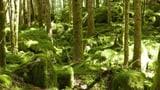 «Beschämende Bilanz»: WWF kritisiert Basler Wald-Politik (Artikel enthält Audio)