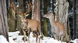 Treffsichere Luzerner Jäger (Artikel enthält Audio)