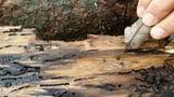 Extremer Befall von Borkenkäfern (Artikel enthält Video)