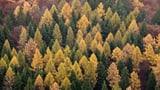 Auch Bäume machen Feinstaub (Artikel enthält Audio)