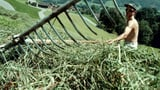 Die Bauern haben wieder zugeschlagen (Artikel enthält Audio)