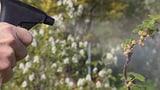 Video «Dagegen ist kein Kraut gewachsen: Pestizide in Privatgärten» abspielen