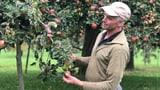 Im Obstgarten und in der Mosterei herrscht Hochbetrieb (Artikel enthält Audio)
