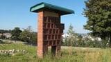 Den Bienen gefällt's, den Luzernern weniger (Artikel enthält Audio)