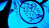 Forscher wollen Kriminelle aufspüren
