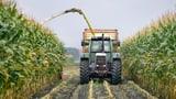 Ja zur Ernährungssicherheit stimmt Bauern zufrieden (Artikel enthält Video)