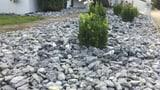 Solothurner Regierung will Schottergärten vermeiden – aber wie? (Artikel enthält Audio)