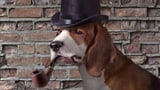 Inspector Crazy: Der schärfste Hund von Scotland Yard! (Artikel enthält Audio)