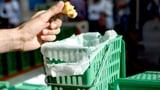 Weshalb immer mehr Plastik im Kompost landet (Artikel enthält Video)