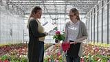 Video «Pflanzen «Suisse Garantie»: Nicht alle haben Schweizer Wurzeln» abspielen