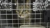 Bund warnt vor unvorsichtiger Einfuhr von Tieren (Artikel enthält Audio)