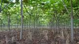 Video «Auf dem Holzweg – Totalverlust mit Holz-Investments» abspielen
