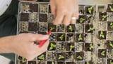 Eine Initiative gegen die Macht der Saatgutmultis  (Artikel enthält Audio)