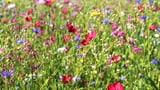 Rat will Artenvielfalt fördern - aber für wie viel Geld? (Artikel enthält Audio)