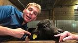 Reto Scherrer bei den Wassebüffeln im Stall (Artikel enthält Bildergalerie)