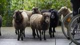Video «Tiergeschichten (3/10): Wie Tiere helfen» abspielen