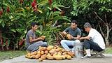 Wenn Kakaobauern auch Firmen-Aktionäre sind (Artikel enthält Video)