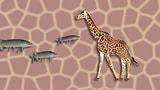 «Giraffe ässet kei Fisch» (Artikel enthält Audio)