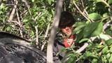 Video «Die Ferienprofis (4)» abspielen