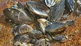 Spezielle Bootswaschplätze am Hallwilersee verzögern sich (Artikel enthält Audio)