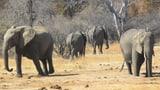 Trophäenjäger gegen Fototouristen in Botswana (Artikel enthält Video)