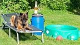 So bringen Sie Ihr Haustier gut durch die Hitze (Artikel enthält Video)