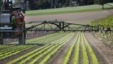 Die Solothurner Gemeinden wollen Chlorothalonil sofort verbieten (Artikel enthält Audio)