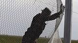 Noch nie waren weltweit so viele Menschen auf der Flucht (Artikel enthält Video)