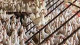 Der Schweiz droht eine Eierknappheit (Artikel enthält Video)