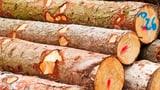 Viele Konsumenten wollen weiterhin wissen, woher das Holz stammt (Artikel enthält Audio)