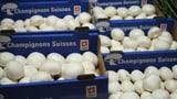 So werden Champignons in der Schweiz produziert (Artikel enthält Video)