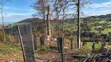 «Innerhalb von zwei Minuten wurde der Wald zerstört» (Artikel enthält Audio)