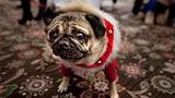 #ChristmasAnimals: Weihnächtlich geschmückte Tiere